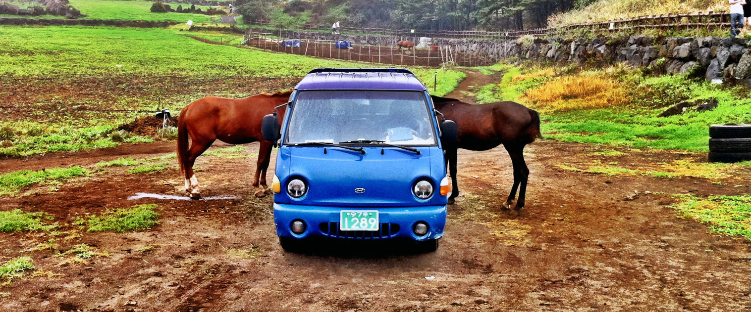 PHOTO : The Peculiar Horses Of Jeju Island