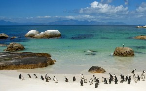 Penguins at Boulder Beach, South Africa