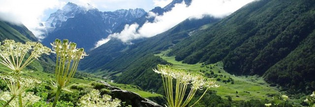 Trekking + Backpacking Valley of Flowers