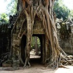 Angkor Wat Tree Entrance - Cambodia, Siem Reap Backpacking