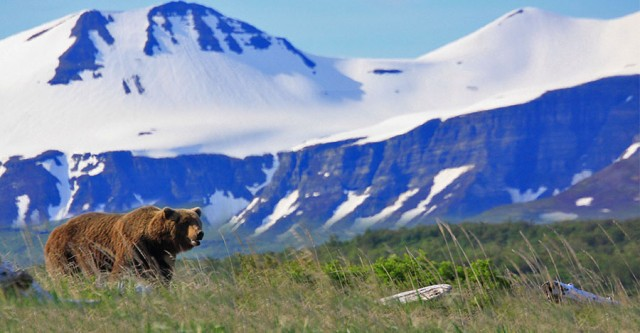 Travel to Alaska for the Bear Adventure