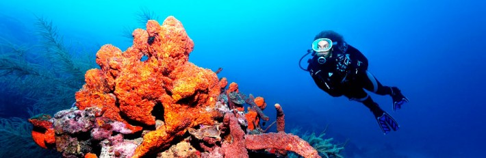 Scuba Diving with Coral