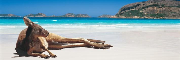 Kangaroo on beach Australia