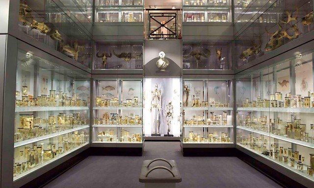 Backpacking Travel For Free at the Hunterian Museum, London
