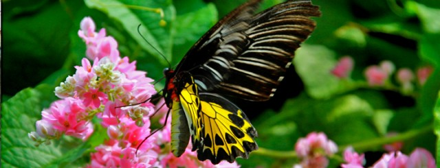 Travel to Alaska for the Butterfly Gardens