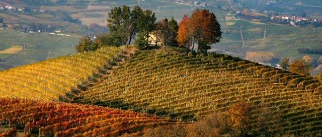 Travel to Langhe for Wine Tasting