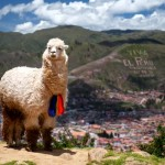 Travel and Work in South America